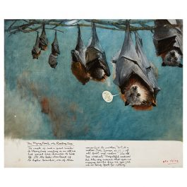 The Flying Foxes & the Roosting Tree